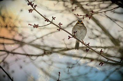 Cloudy Finch Poster by Trish Tritz