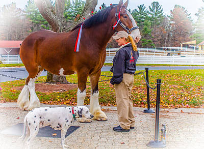 Clydesdale With Handler And His Companion Poster