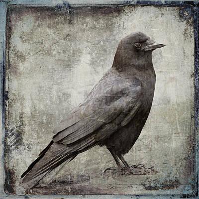 Coastal Crow Poster by Carol Leigh
