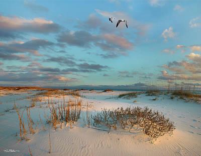 Coastal Dunes Poster by Tim Fitzharris