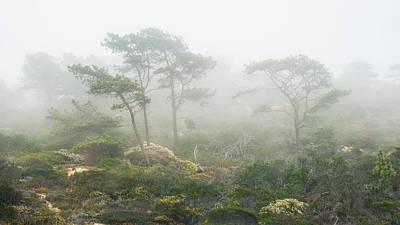 Coastal Fog Poster