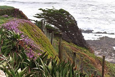 Coastal Windblown Trees Poster
