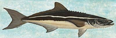 Cobia Poster