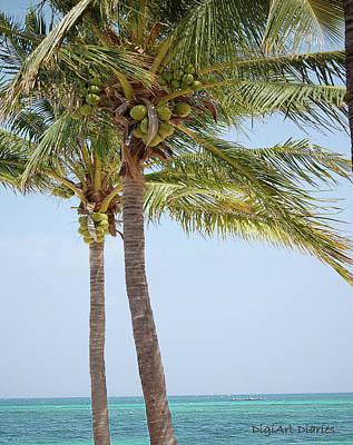Coconut Palm Tango Poster