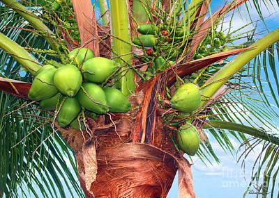 Coconut Palm Treasure Coast Florida C1 Poster