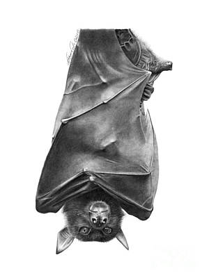 Coffie The Fruit Bat Poster by Abbey Noelle