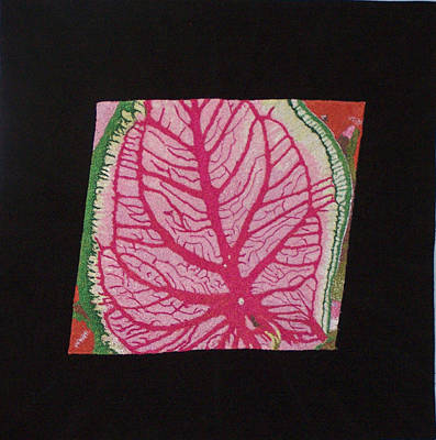 Coleus Poster by Jenny Williams