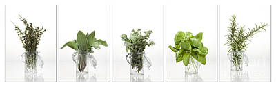 Collage Of Herbs In A Glass Jar Poster by Wolfgang Steiner