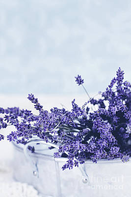 Collection Of Lavender  Poster