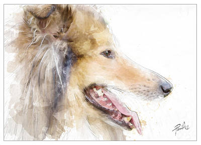 Collie Poster by Patti Parish