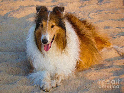 Collie Relaxing In The Sand Poster