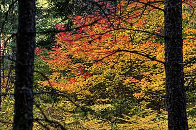 Cascade Mountain Range Fall Color Poster