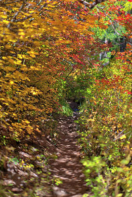 Cascade Mountain Range Color Vortex Poster