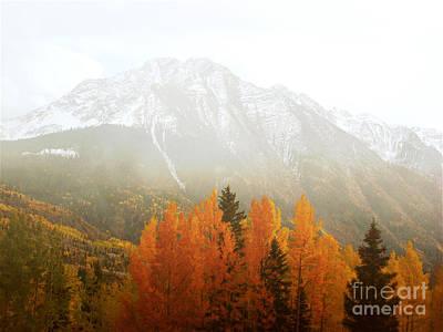 Colorado Aspen Trees Mountain Dreamy Landscape Poster by Andrea Hazel Ihlefeld