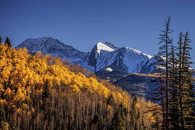 Colorado Aspens At Autumn Poster
