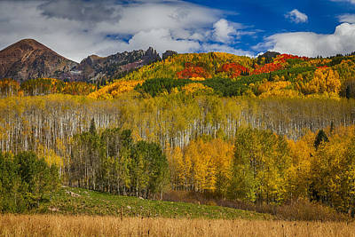 Colorado Kebler Pass Fall Beauty Poster