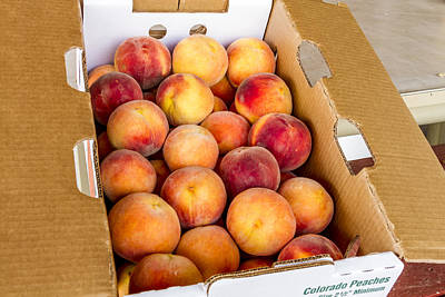 Colorado Peaches Ready For Market Poster by Teri Virbickis