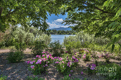 Colorado Rose Garden Poster