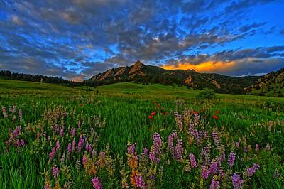 Colorado Wildflower Sunrise Poster by Scott Mahon