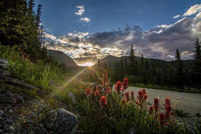 Colorado Wildflowers Under Evening Sun Poster