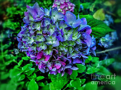 Colored Fairy Hydrangea Poster by Olga Lyakh