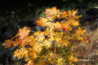 Colored Maple Leaves Poster