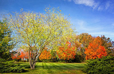 Colorful Backyard Scene Poster