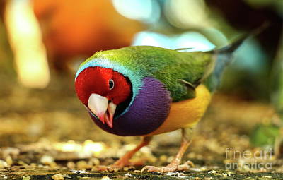 Colorful Bird Poster