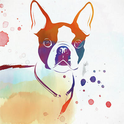Colorful Boston Terrier Poster