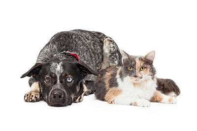 Colorful Cattle Dog And Calico Cat Poster by Susan Schmitz