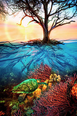 Poster featuring the photograph Colorful Coral Seas by Debra and Dave Vanderlaan