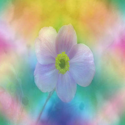 Colorful Dreams Poster by Lena Photo Art