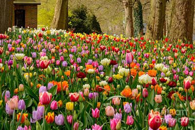 Colorful Field Of Tulips, Belgium Poster by Sinisa CIGLENECKI