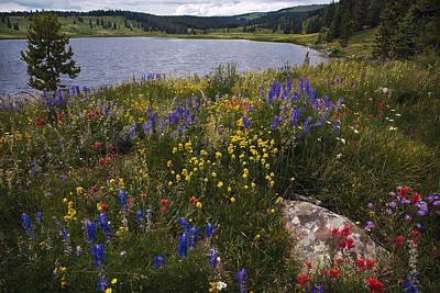 Dumont Lake Colorful Flowers Poster by Dave Dilli
