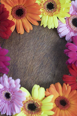 Colorful Gerbera Daisies In A Circle Poster