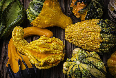 Colorful Gourds Poster by Garry Gay