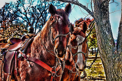 Colorful Horses Poster