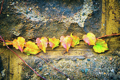 Colorful Leaves Poster by Silvia Ganora