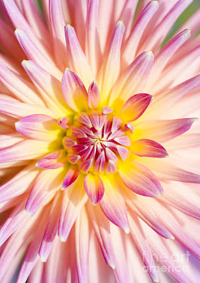 Colorful Macro Dahlia Flower. Beauty In Springtime Poster by Jorgo Photography - Wall Art Gallery