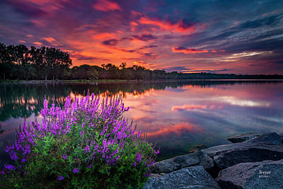 Colorful Presunrise Over Willow Bay Poster by Scott Reyes