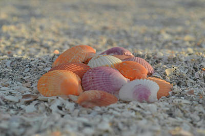 Poster featuring the photograph Colorful Scallop Shells by Melanie Moraga