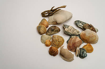 Colorful Seashells Poster by Billy Burdette