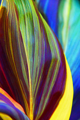 Colorful Ti Leaves Poster by Kerri Ligatich
