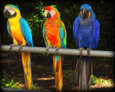 Colorful Trio Poster