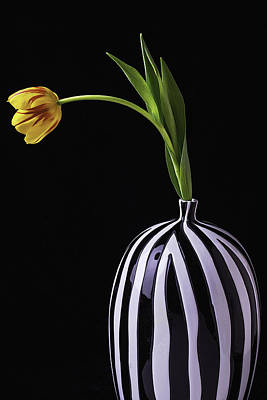 Colorful Tulip In Vase Poster by Garry Gay