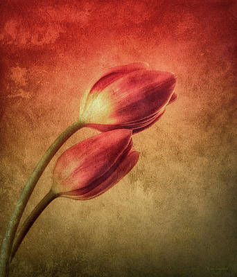 Colorful Tulips Textured Poster by Wim Lanclus