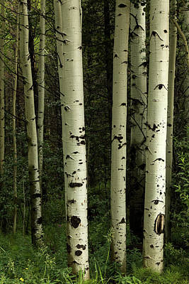 Poster featuring the photograph Colors And Texture Of A Forest Portrait by James BO Insogna