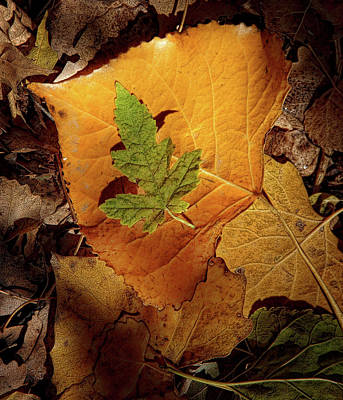 Poster featuring the photograph Colors Of Autumn by Marie Leslie