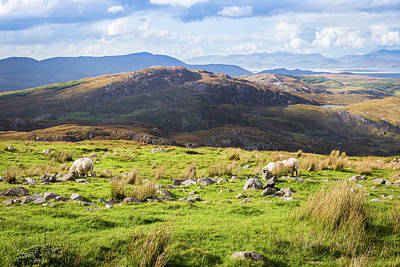 Colourful Undulating Irish Landscape In Kerry With Grazing Sheep Poster by Semmick Photo