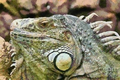 Common Green Iguana Poster